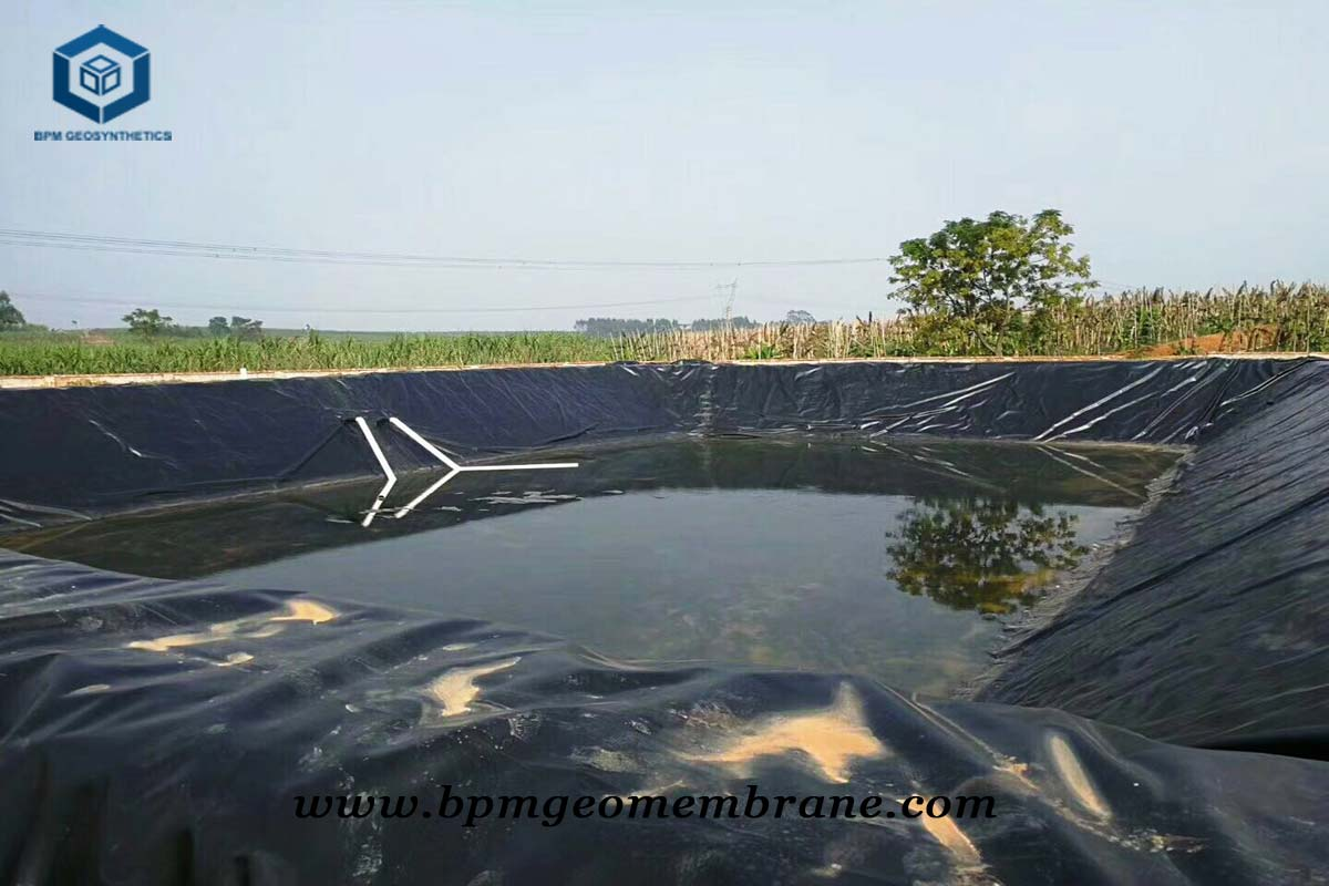 Commercial Pond Liner for Fish Farm Project in Singapore